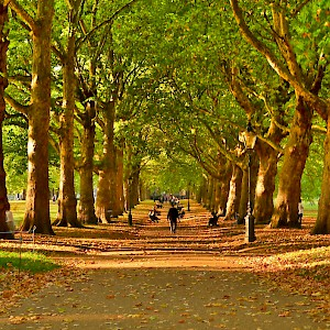A path in Green Park in autumn (Photo by Garry Knight)