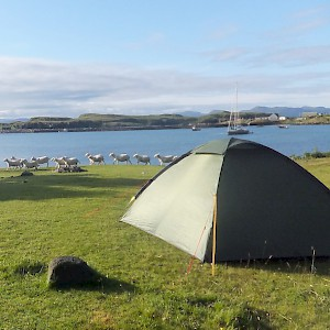 Sheep wander by an idyllic campsite on the Isle of Eigg, Scotland (Photo by Surprise Truck)